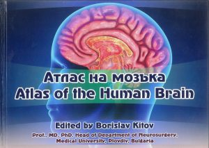 атлас на мозъка